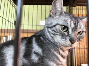 猫・ねこ・NEKO ちゃん❤❤ LOVERY