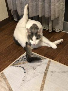 ヨガをする猫・・笑