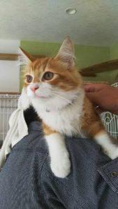 6ヶ月後の退室 長期お預かり猫 ジャンフォレフトキャット