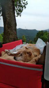 老犬・寝たきり問題ありません!
