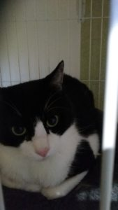 猫のお友達は・神奈川県から
