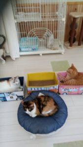猫ちゃんのお部屋は・・爪研ぎ電車が走る!!