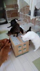猫ちゃん大人気・・段ボールのお家