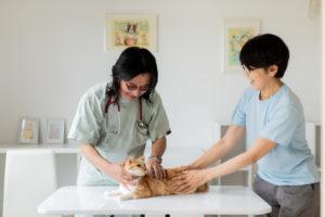 犬猫長期療養施設・往診施設開設 10・2 OPEN