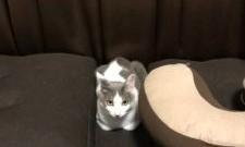 猫のたならん・・フィット感❤❤❤