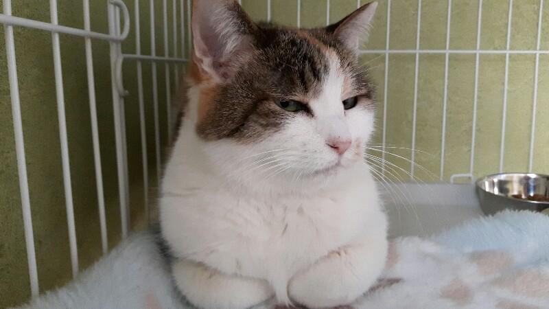 猫の仕草でわかる・いい気分・嫌な気分
