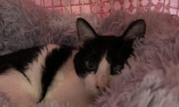 愛猫の猫かぜについて