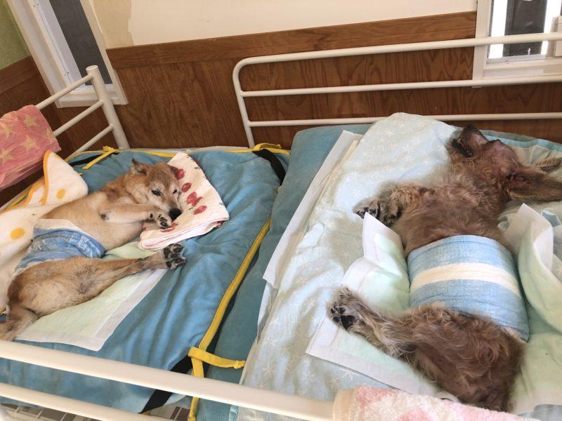 犬猫長期療養について撮影