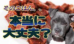 犬のご飯は・・ほんとに大丈夫?【YouTube】