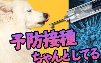犬の狂犬病予防注射は、なぜ必要?