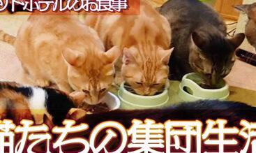 猫ちゃんのお友達と集団生活