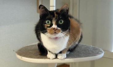 猫の熱中症の症状は・・とは