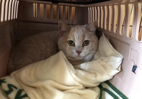 猫・愛猫・わが家の猫・免疫力を高めるには・・?
