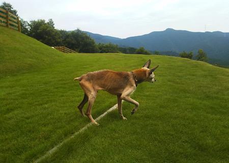 シニア犬 程度な運動は健康維持