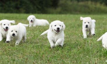 犬の下痢の原因・危険な下痢の判断基準
