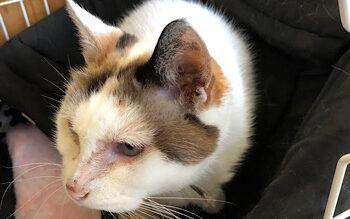 猫・季節の変わり目の体調不良の原因